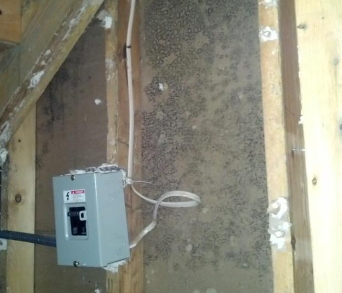 Mold Damage in a basement closet Before