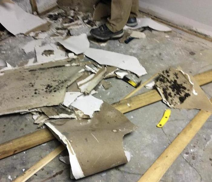Mold Remediation Mold Damage Cleanup and What to Expect