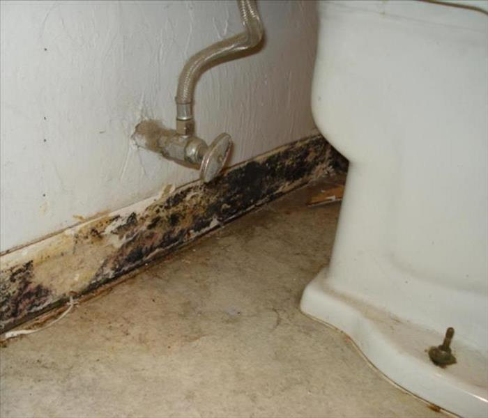 Mold Remediation Why should my water damage be professionally dried?